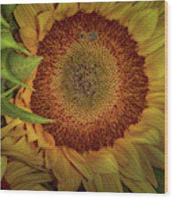 Sunflower Splendor Wood Print by Judy Hall-Folde