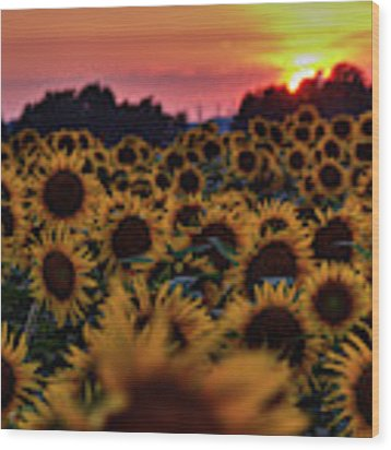 Sunflower Sunset 001 Wood Print by Lance Vaughn