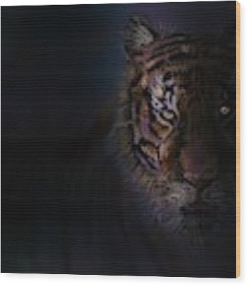 Tiger In The Dark Wood Print by Darren Cannell