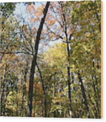 Transitioning Merwin Canopy Wood Print by Dylan Punke