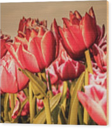 Tulip Fields Wood Print by Anjo Ten Kate