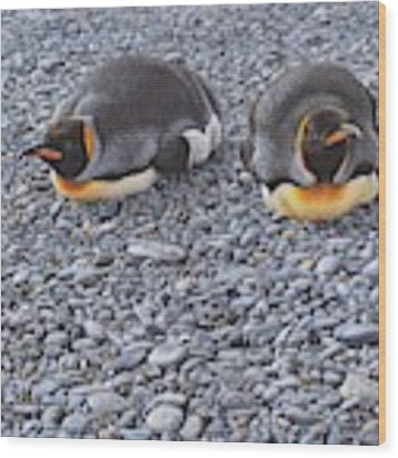 Two King Penguins By Alan M Hunt Wood Print by Alan M Hunt