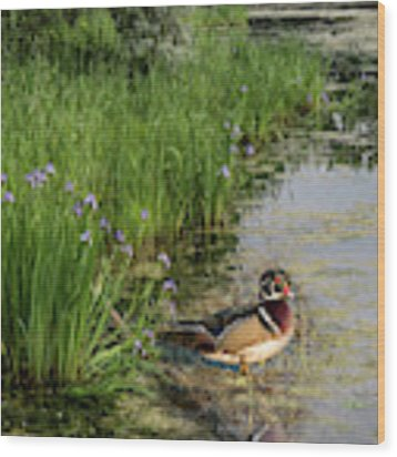 Wood Duck And Iris Wood Print by Patti Deters
