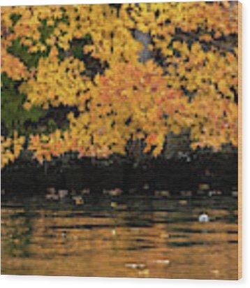 Yellow On Water Wood Print by Dan Friend