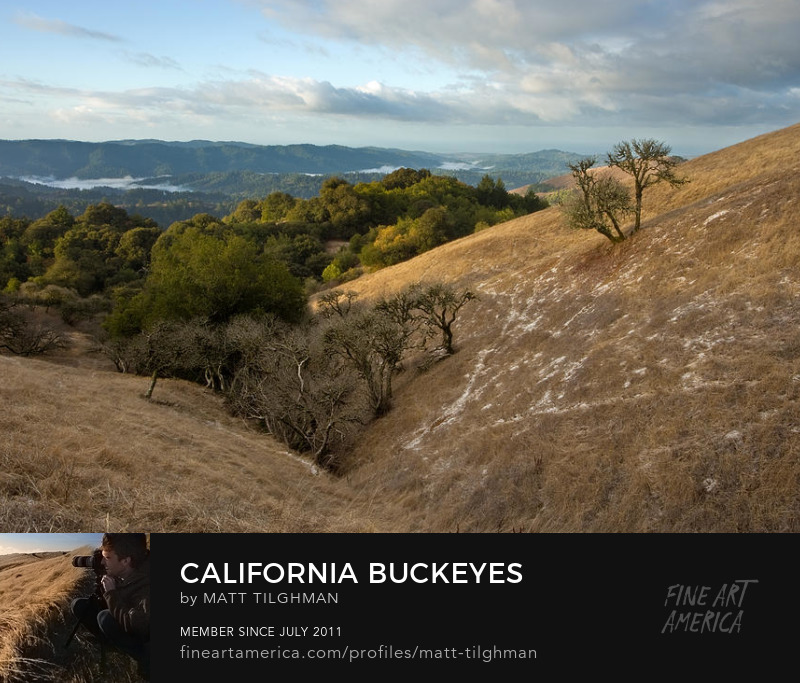 Russian Ridge California Art Online