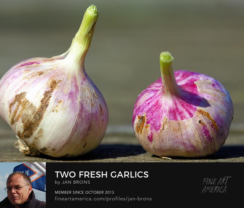 Two fresh garlics - Sell Art Online