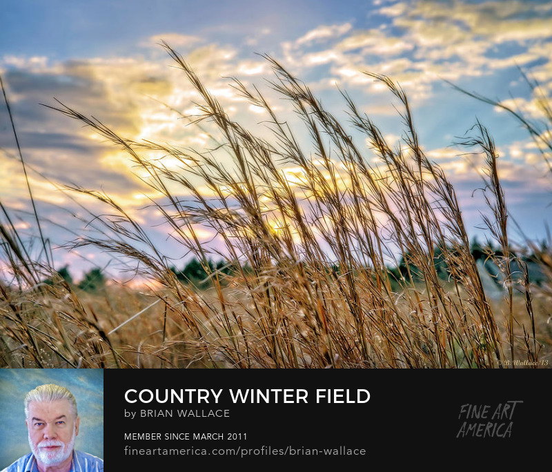 Country Winter Field by Brian Wallace