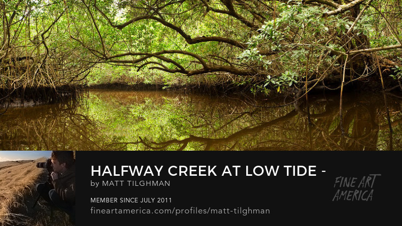 Halfway Creek Florida Mangroves Art Online