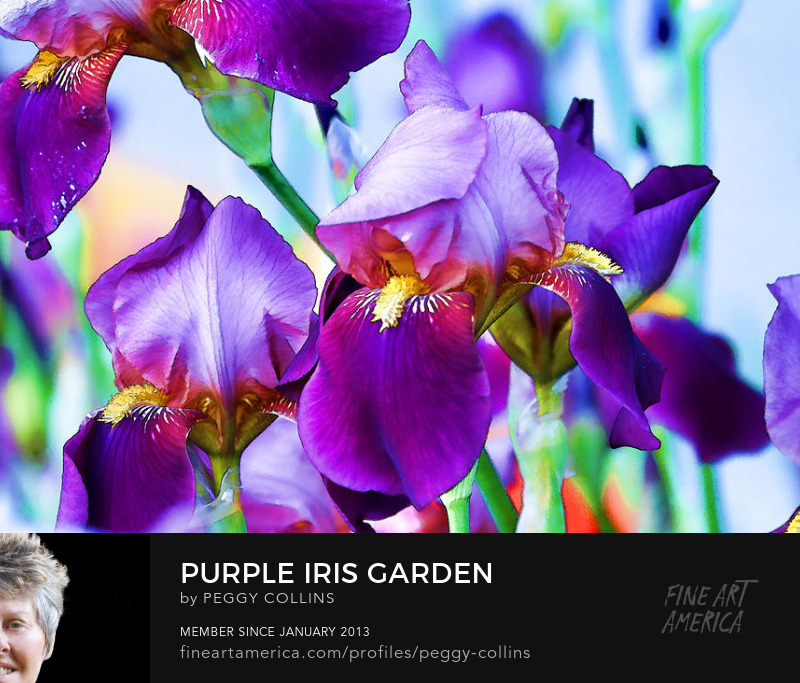 iris garden photograph by peggy collins