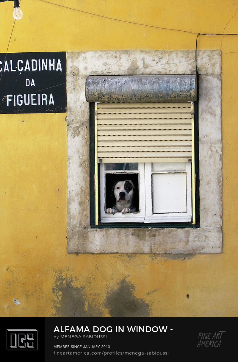Alfama Dog in the Window Calcadinha Menega Sabidussi
