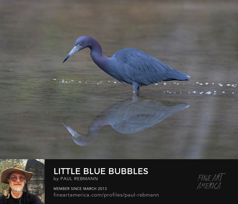 View online purchase options for Little Blue Bubbles by Paul Rebmann