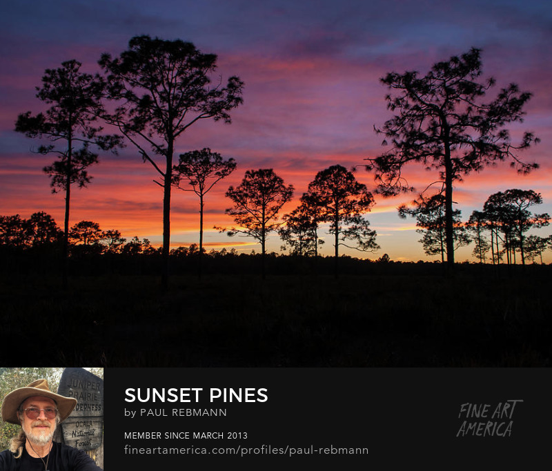 View online purchase options for Sunset Pines by Paul Rebmann
