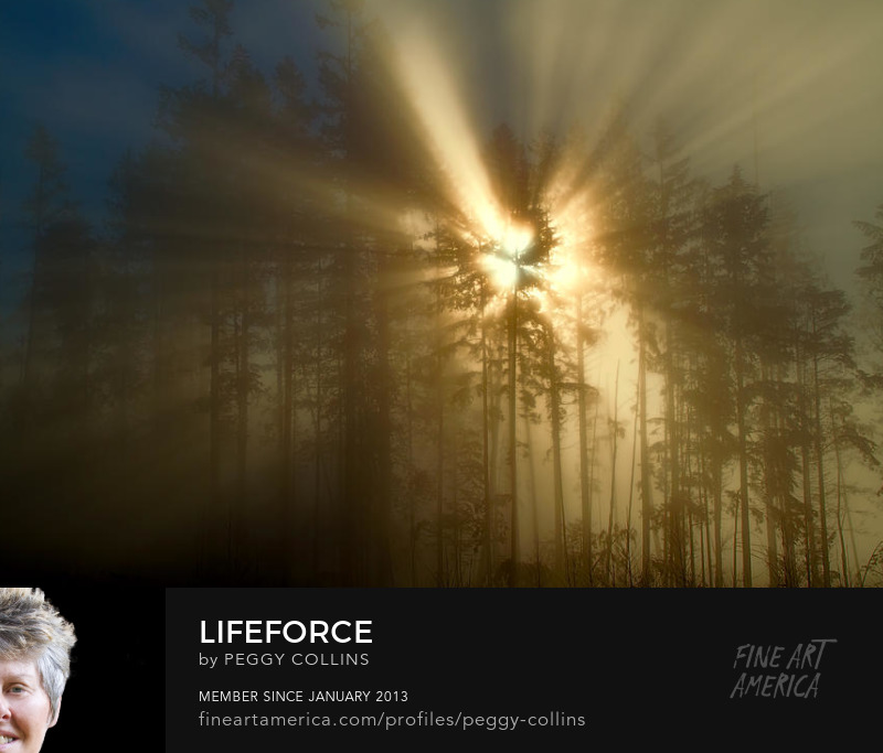 lifeforce photograph by peggy collins