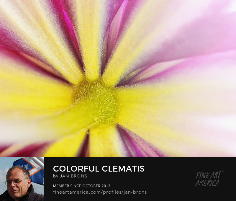 Colorful Clematis - Art Online