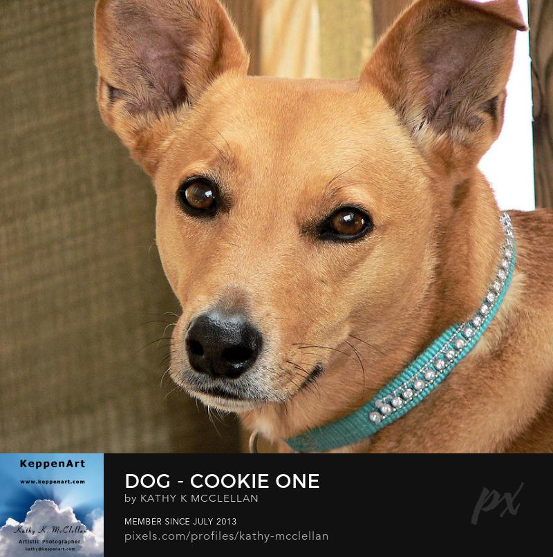 Dog - Cookie One by Kathy K. McClellan