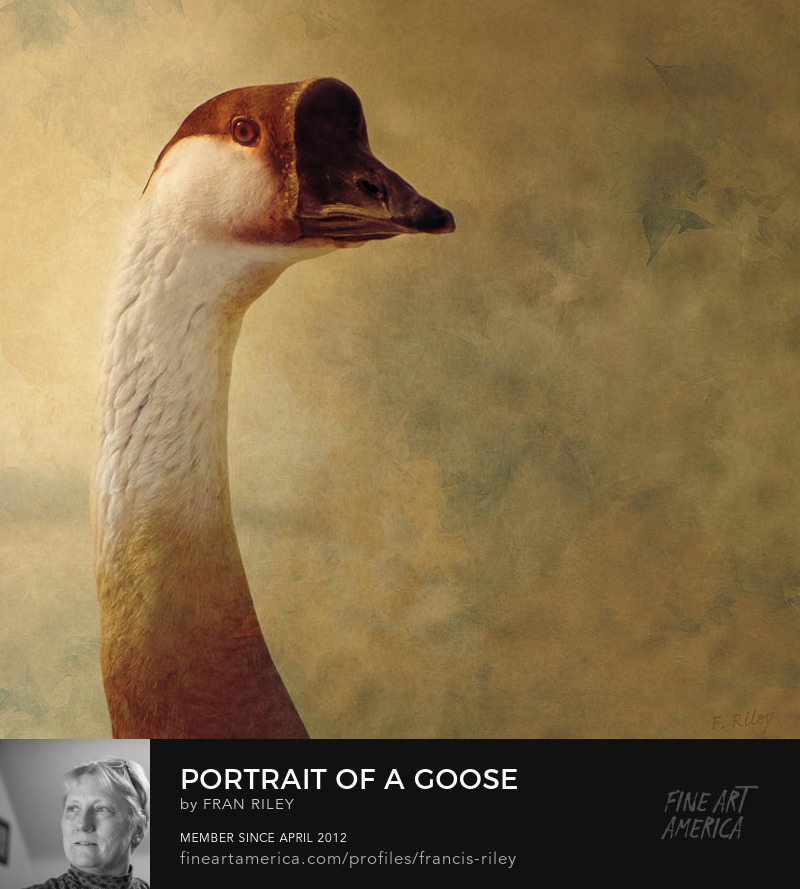 Portrait of a Goose by Fran Riley