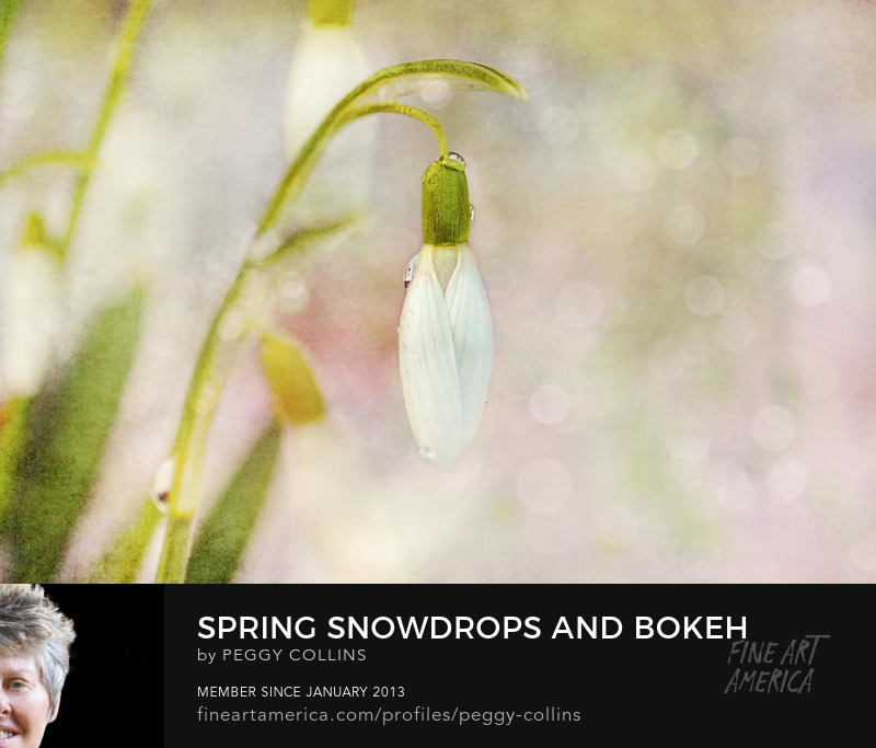 spring snowdrops and bokeh photograph by peggy collins