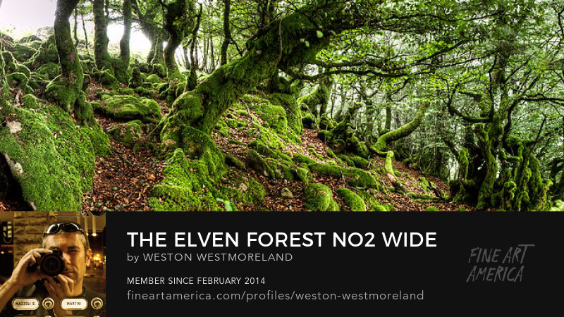 The Elven forest  - Weston Westmoreland