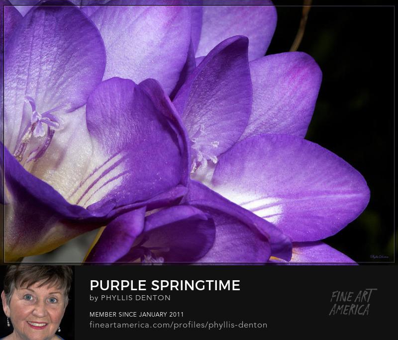 Purple Springtime fine art by Phyllis Denton
