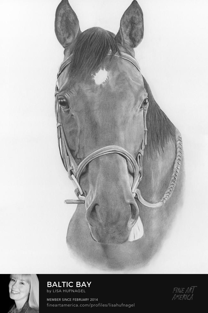 graphite pencil horse thoroughbred headshot