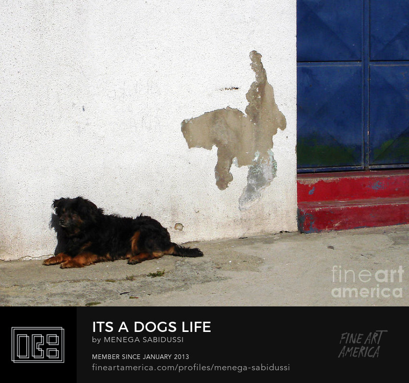 Dogs Life Stray Dog Portugal Street Photography Menega Sabidussi