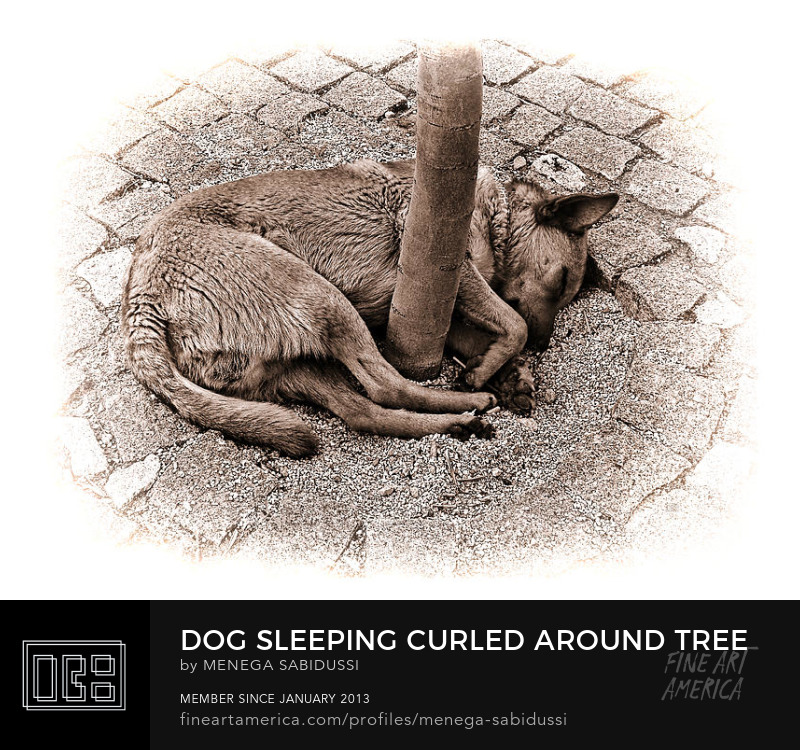 Black White Sepia Dog Portugal Street Sleeping Tree Menega Sabidussi