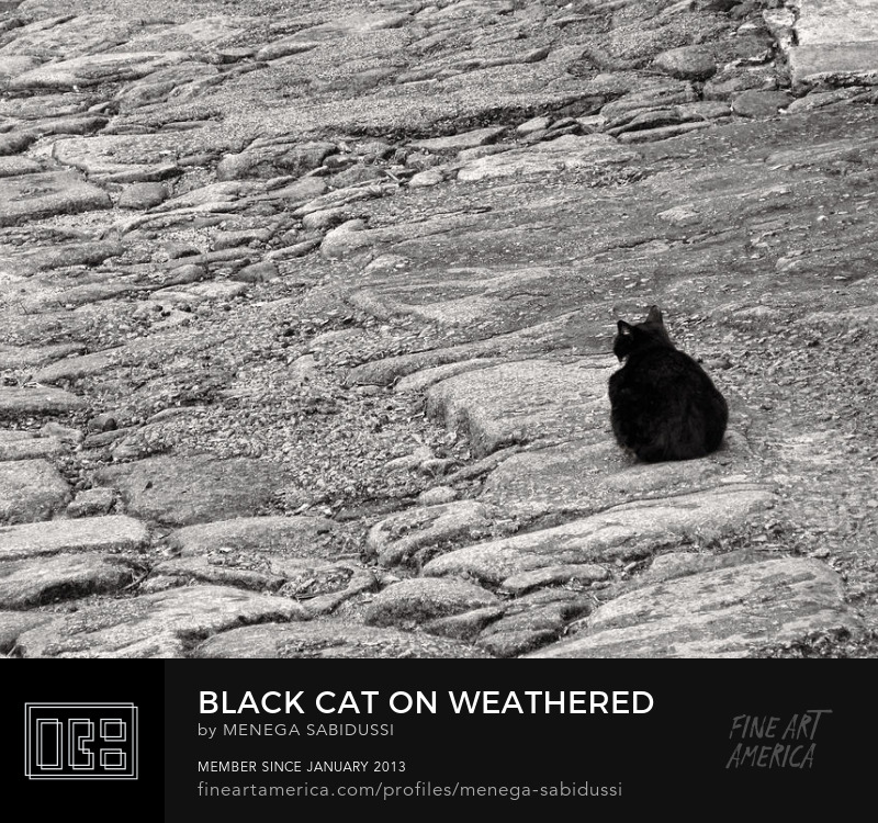 Cat On Weathered Cobblestones Black White Monochrome Photography Menega Sabidussi