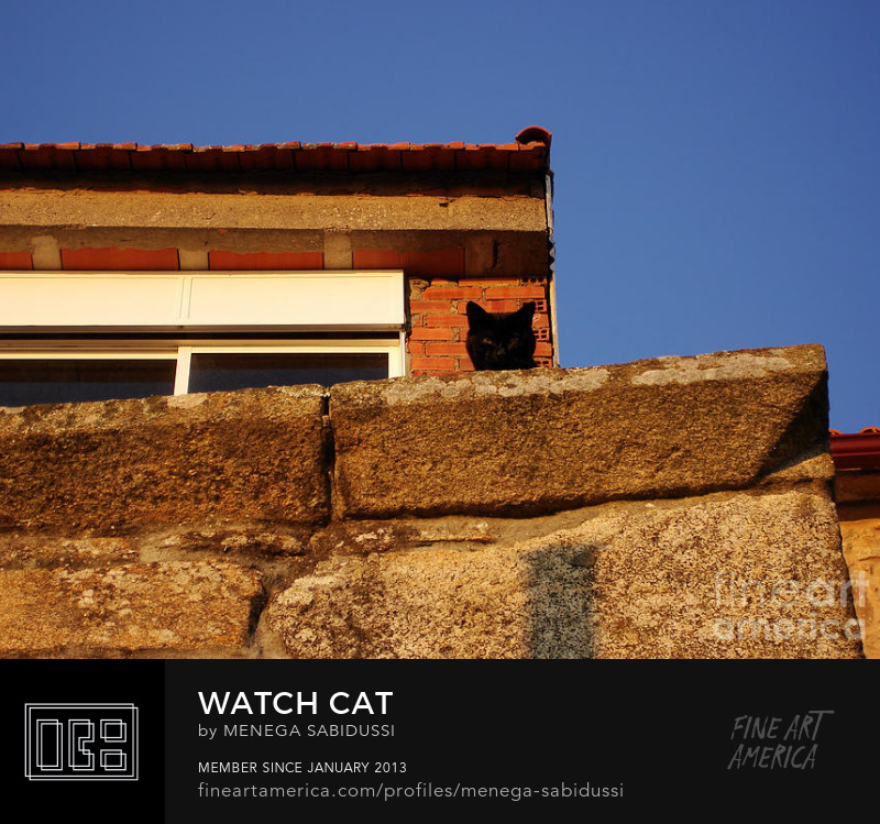 Watchful Black Cat Brick Wall Sunset Photography Menega Sabidussi
