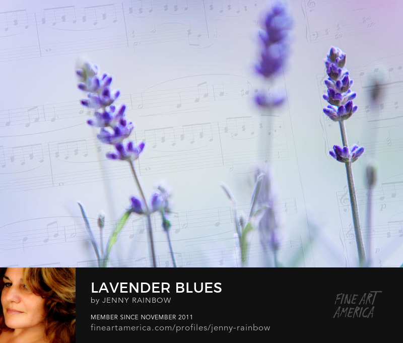 Lavander Blues by Jenny Rainbow