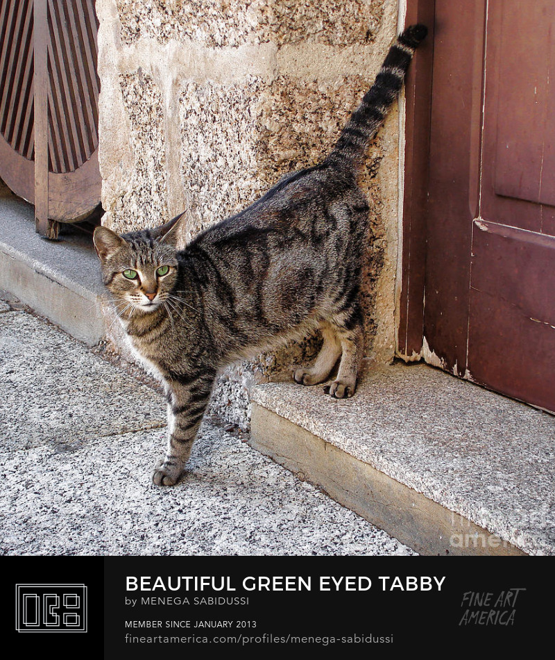 Beautiful Green Eyed Tabby Brown Door Menega Sabidussi
