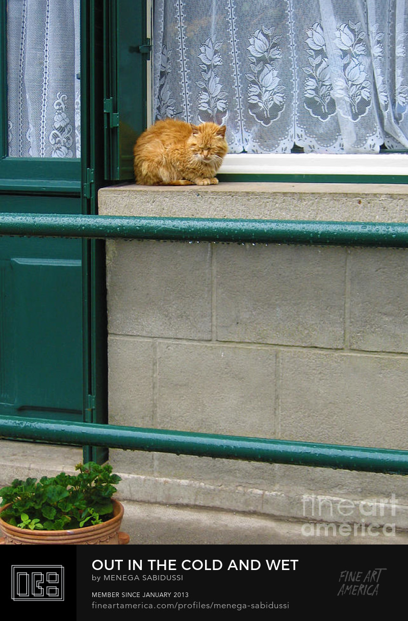 Ginger Cat Rain Cold France Picturesque Photograph Menega Sabidussi