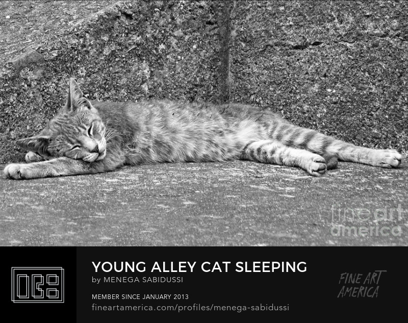 Young Alley Cat Sleeping Gray Silver Monochrome Photograph Menega Sabidussi