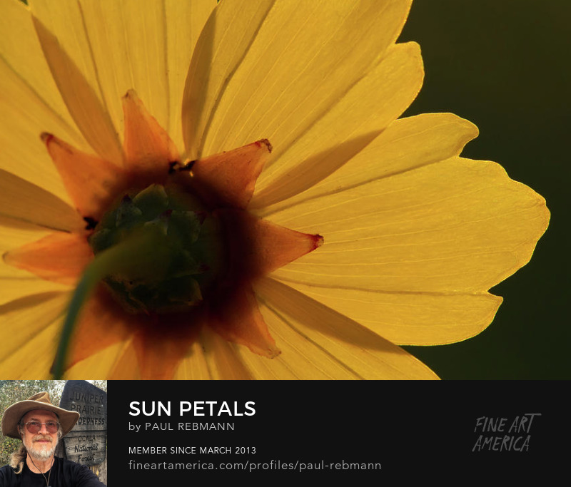 View online purchase options for Sun Petals by Paul Rebmann