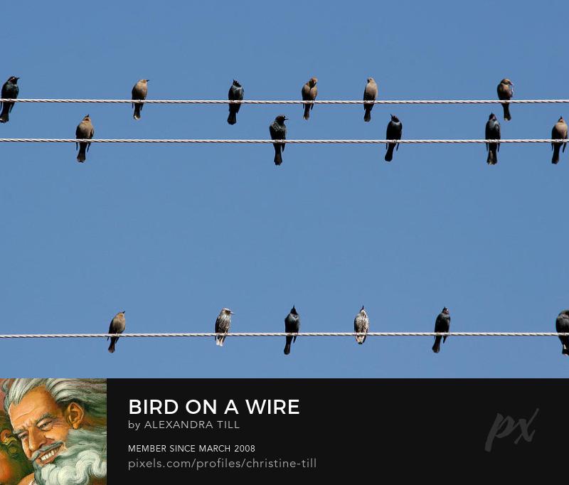 Birds On A Wire Art Prints