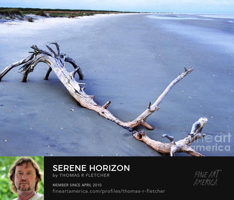Driftwood on Beach, Little St Simons Island Georgia Art Prints
