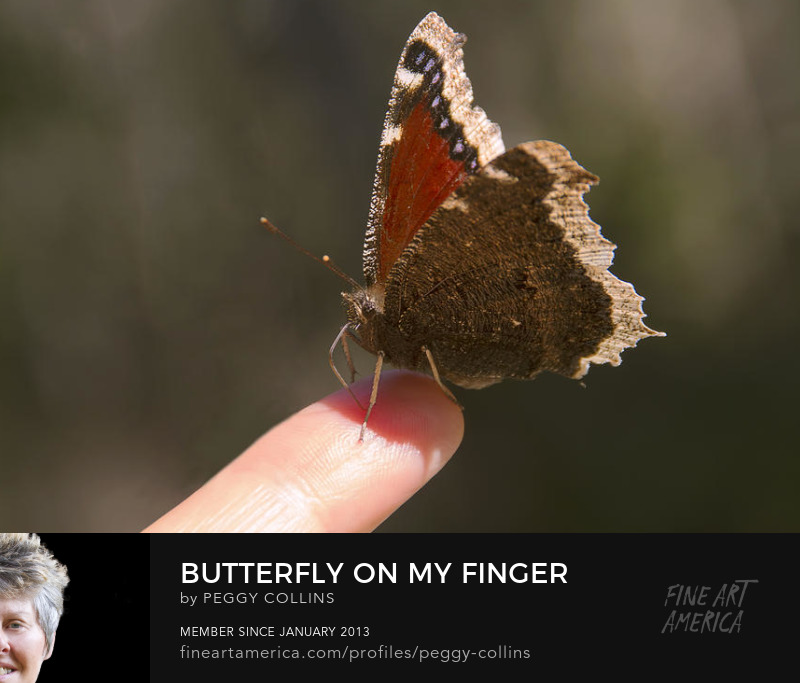 butterfly on my finger photograph by peggy collins