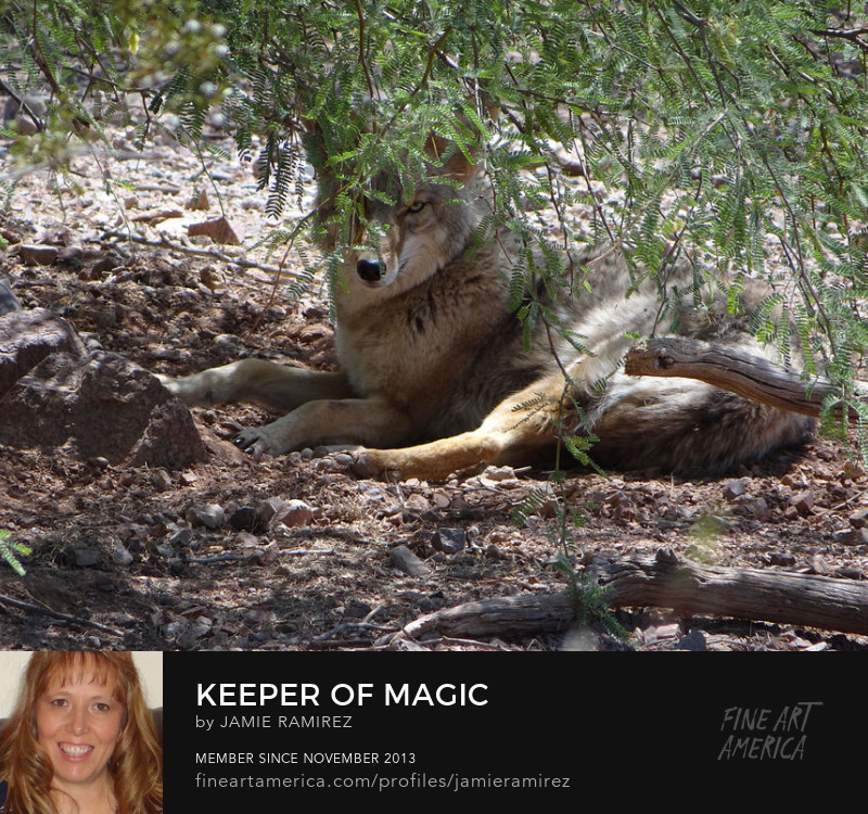 Keeper Of Magic Photography by Jamie Ramirez Art Prints