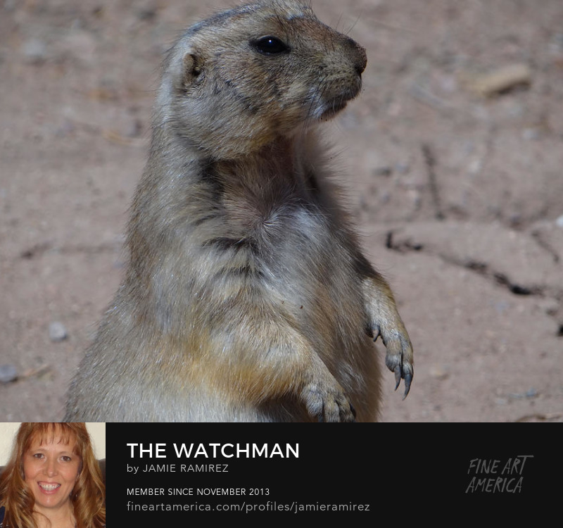 The Watchman Photo by Jamie Ramirez