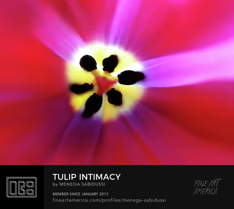 Tulip Vivid Floral Abstract closeup pink red fuchsia menega sabidussi