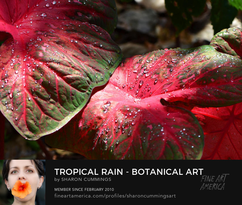 Caladium Art Prints Tropical Decorating Ideas