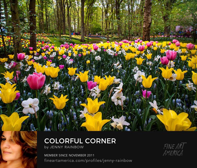 Colorful Corner Of The Keukenhof Garden 1. Tulips Display. Netherlands by Jenny Rainbow