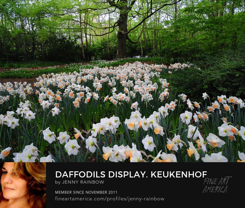 Daffodils Display. Keukenhof Botanical Garden. Netherlands by Jenny Rainbow