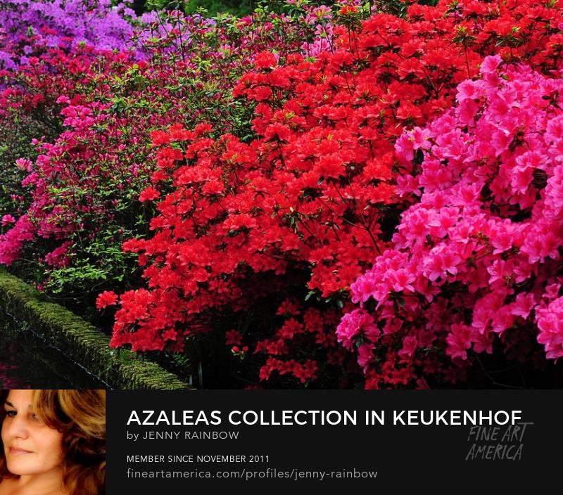 Azaleas Collection In Keukenhof Botanical Garden. Netherlands by Jenny Rainbow
