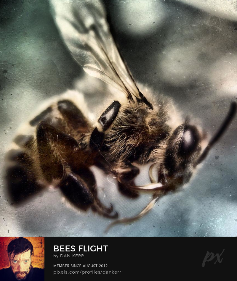 Macro image of Bee