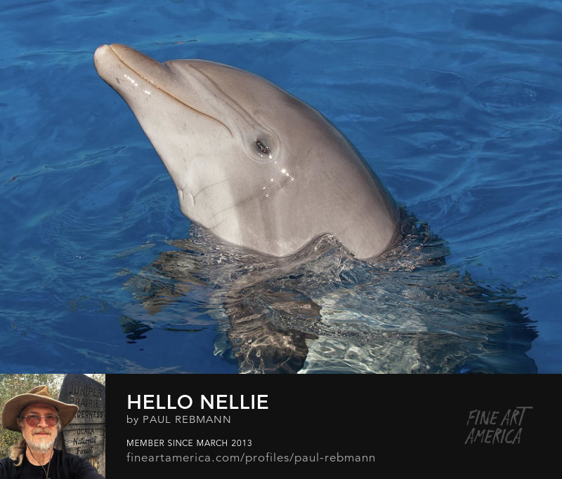 View online purchase options for Hello Nellie by Paul Rebmann