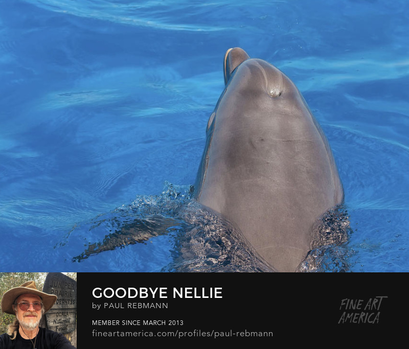 View online purchase options for Goodbye Nellie by Paul Rebmann
