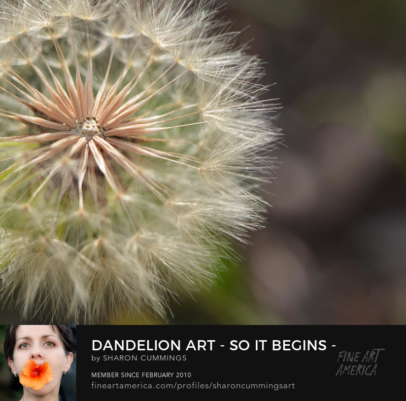Dandelion Art Prints Botanical Photos For Sale