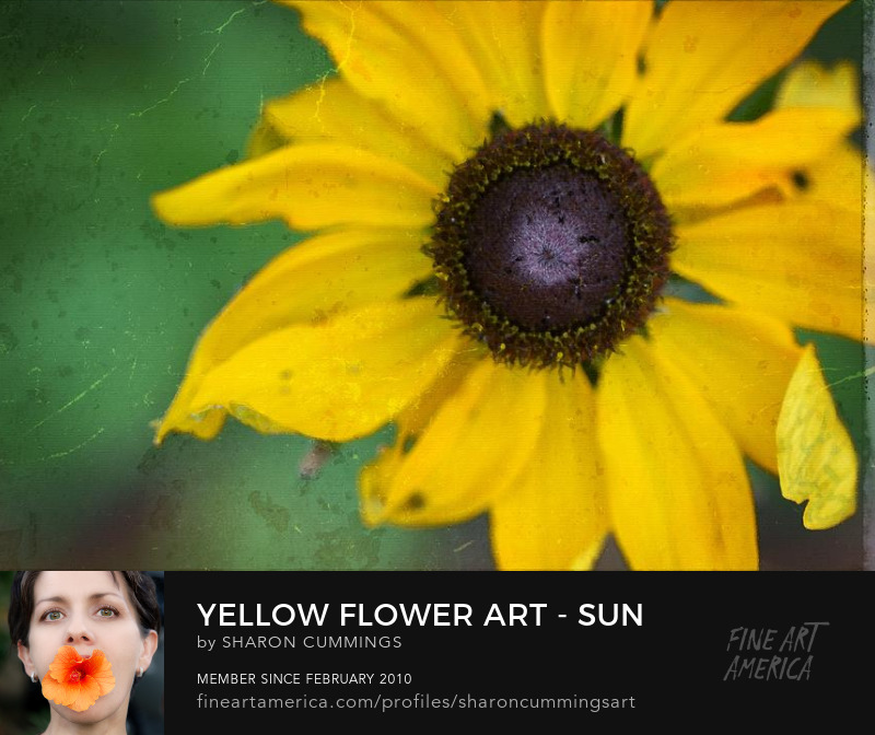 Yellow Flower Art Daisy Prints Online