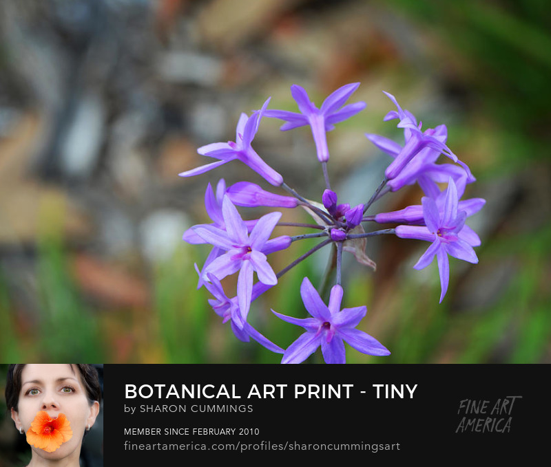 Botanical Art Prints For Sale Online