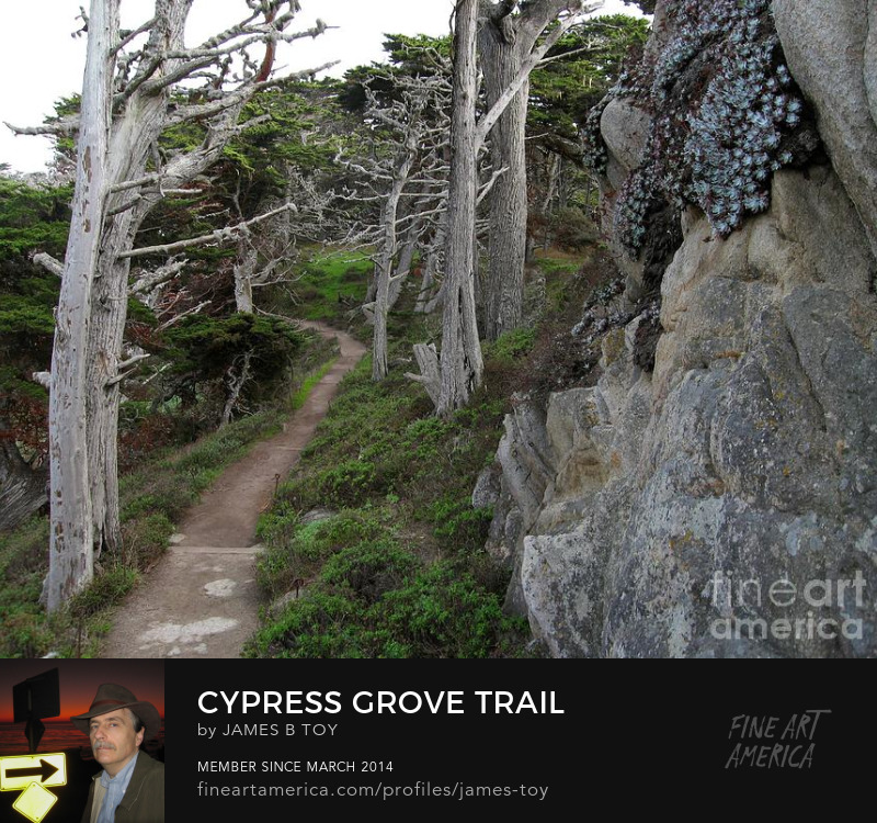 Cypress Grove Trail at Point Lobos